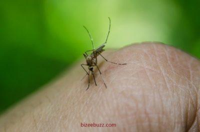 Dengue Fever Virus