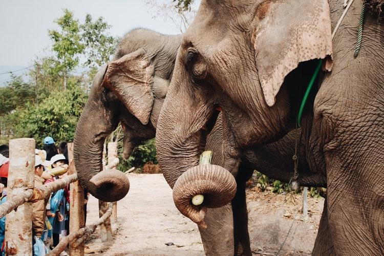 Alipur Zoo